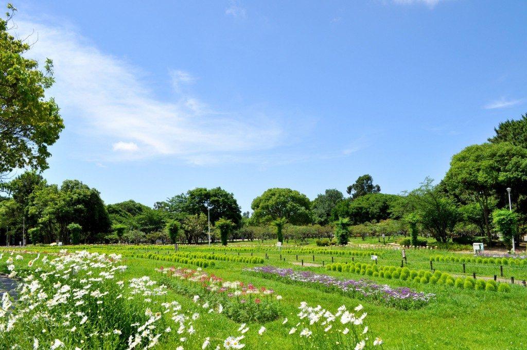 大阪府北摂の公園