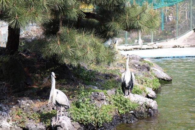 天王寺動物園の鳥