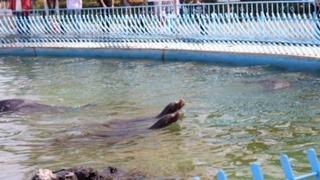 天王寺動物園のアシカ